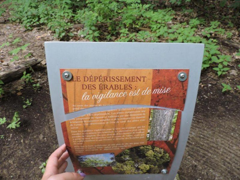 Des bornes didactiques ont été vandalisées dans le Parc de l'érablière l'automne dernier.