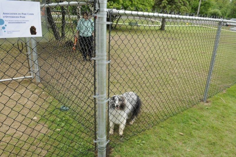 Le parc canin est situé au 318, rue Connaught.