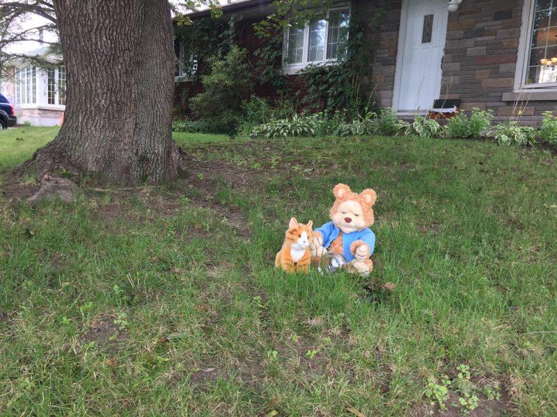 Vendredi après-midi, deux toutous se trouvaient sur le terrain avant de la maison  de Cheryl Bau Tremblay.
