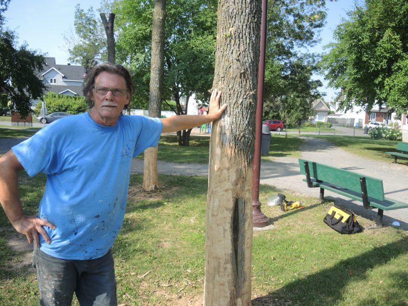 L'artiste Daniel-Vincent Bernard devant les trois arbres avec lesquels il travaillera.