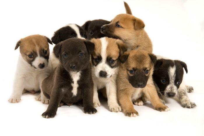 Les gens qui souhaitent adopter un chien sont invités à rencontrer les étudiants de Techniques de santé pour identifier la race de chien qui convient le mieux à leur style de vie. Cette rencontre permettra aux étudiants de mieux cibler les besoins des participants afin de pouvoir les conseiller le plus judicieusement possible. Les intéressés peuvent s'inscrire à l'une des deux rencontres d'une durée de 45 à 60 minutes qui se tiendront le lundi 10 avril, à 12h45, et le mardi 11 avril, à 15h30, au Cégep de Saint Hyacinthe. Info: Sylvie Giroux au 450 773-6800, poste 2649, ou: sgiroux@cegepsth.qc.ca. Date limite d'inscription: 10 mars.