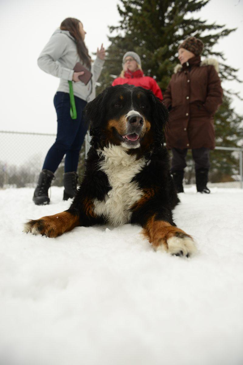 Selon les propos de la mairesse Danielle Lavoie, le conseil municipal a fait volte-face sur sa position face au parc canin.