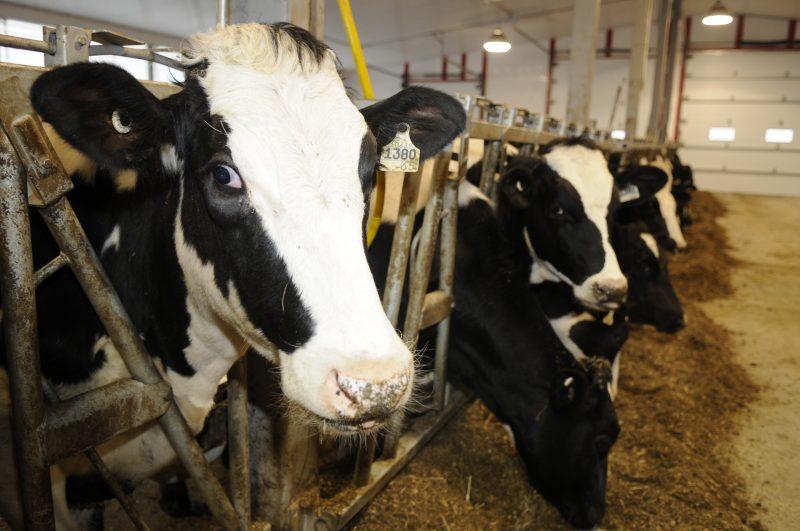 Le taux de décroissance d'entreprises laitières en 20 ans dans la région est supérieur à l'ensemble de la Montérégie.