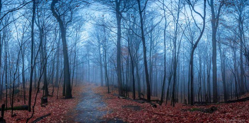 La photo  Misty Morning est en lice dans la catégorie «Panoramique» de la section ouverte.