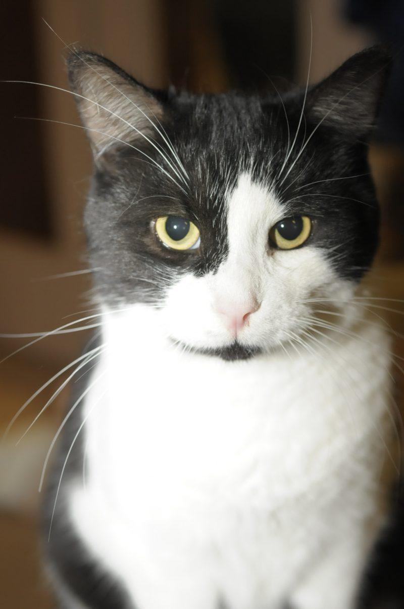 Selon le Dr Joël Bergeron, l'identification d'un chat favorise la responsabilisation et la sensibilisation des propriétaires d'animaux, qui seront moins enclins à abandonner leur compagnon.