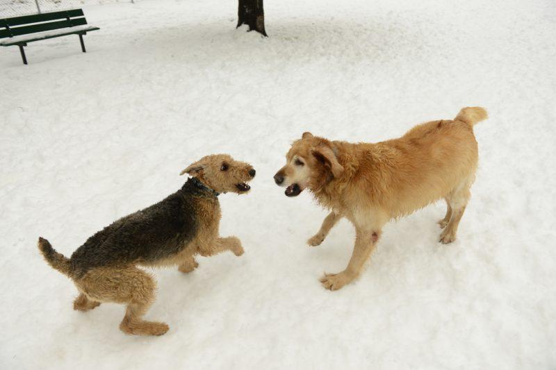 L'emplacement du nouveau parc à chien sera connu en mars. Photothèque | L'Œil Régional ©