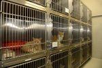 La Régie des services animaliers adopte son budget