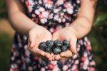 Malgré l'incertitude, la cueillette de fruits rencontre un franc succès