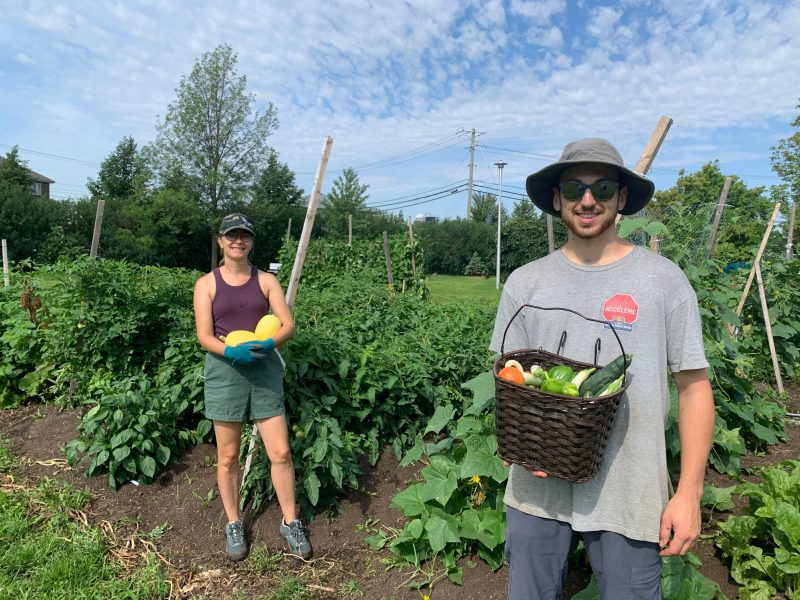 L'agente de développement à la CDC, Mélodie Georget, et le responsable du jardin collectif, Marc-Olivier Beaudry, continueront de récolter des légumes jusqu'à cet automne. Photo Sarah-Eve Charland | L'Œil Régional ©