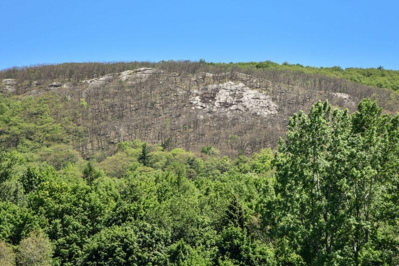 Mont-Saint-Hilaire et la montagne infestées par une chenille nuisible