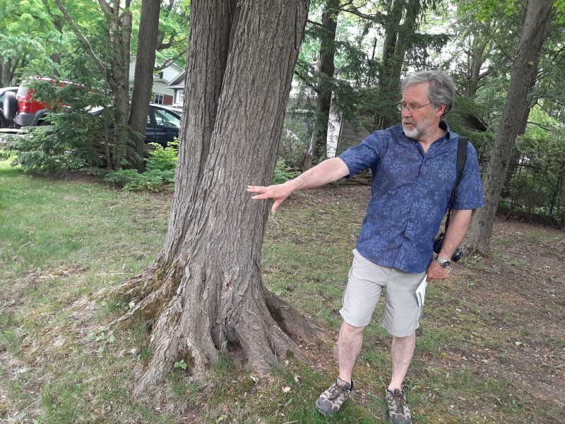 Gilles Saindon explique que les travaux endommageront plusieurs arbres qui longent la rue Auclair. Photo Vincent Guilbault | L'Œil Régional ©